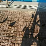 Little sparrows at the pool