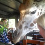 Close encounters with the Giraffes