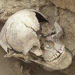 An ancient skull