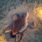 砂浜で作った!