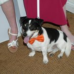 "Our Jack Russell ""Patch"" who came to the wedding xx"