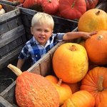 pumpkins and gourds for sale