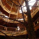 ホテルの中心に木があり、その周りに螺旋状に部屋が連なる。