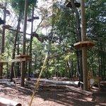 Treetop Adventure Courses