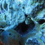 Pontos de mergulho com muita vida marinha