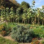 The lovely back garden where they grow their own veg.