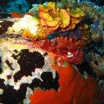 Sardinia Diving