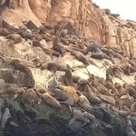 Smelling and roaring sea lions