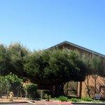 Edna Valley Vineyard, San Luis Obispo, Ca
