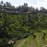 Rice terraces near-by
