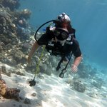 diving with coral  ras mohamed