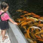 Bermain bersama Ikan