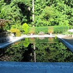 Reflecting pool at Milner Gardens