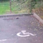 Les jolis rats sur le parking