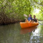 Peaceful Mangroves