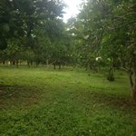 You can pick oranges from the onsite orange grove