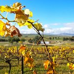 Autumn at the winery
