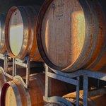 Delatite Wine barrels