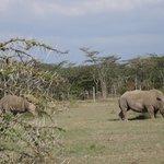 Ol Pej Rhino Sanctuary