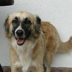 Flash, der sympathische Hund des Hauses