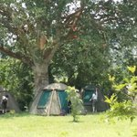 Camping at Craters campsite is under the fig trees! It's real fun