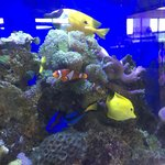 They've got the whole gang — Marlin, Nemo, Dory, and even Glil!