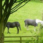 Marjorie's Horses