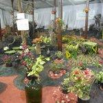The Garden Gallary