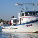Newport Landing Whale Watch, Newport Beach, Ca