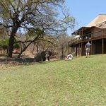 Elephant at the Naledi Lodge
