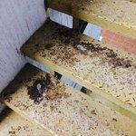 Escaleras oxidadas