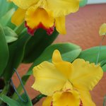 Orchids Naples Botanical Gardens