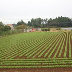 Agricultural areas in Narita district are nice to see