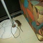 Kuta Station Hotel 的死老鼠!