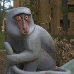 Faragott majom szobor