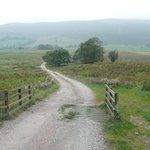The meandering drive