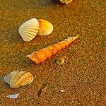 Sea shell n crab