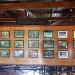 Boards at the dining area showing some wildlife to look out for