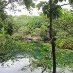 Ponderosa - El eden - cenote
