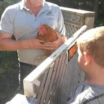 Gary showing the boys the chickens