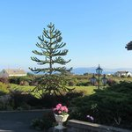 A Monkey Puzzle tree on the property
