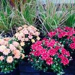 Beautiful Buckets of Flowers Everywhere!!