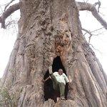 A Big Baobab Tree With A Hole-Tarangire N.Park