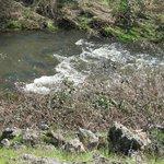 Miners Ravine Creek, between Sierra College Blvd and East Roseville Parkway.