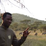 Salim with zebras grazing close to tent
