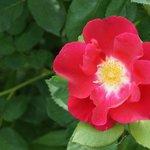 赤の綺麗な花でした