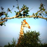 Walking Safari at Addo Afrique