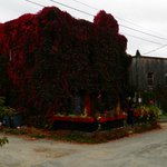Griffin Gastropub in autumn colours