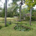Den store have med garden pool