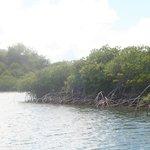 mangrove atoll  where we kayaked